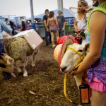 Branchville, NJ: State Fair (sheep)